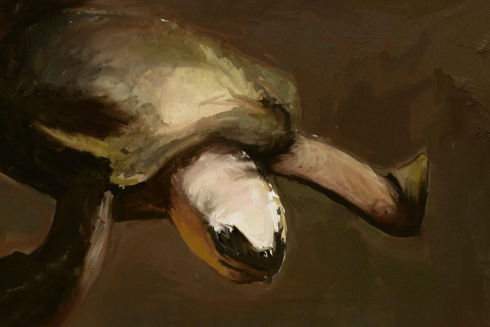 Regreso a casa con tortuga