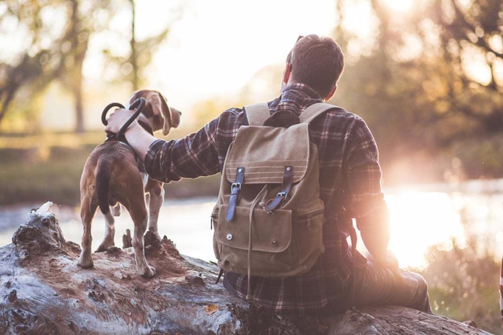 La construcción de la serenidad no acepta cachorros