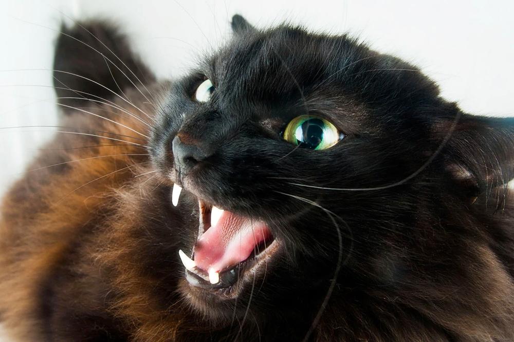 Un gato del otro lado del mostrador